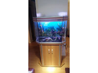 165 LITER AQUA ONE FISH TANK AND STAN FOR SALE