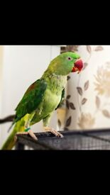 Fred - Amazonian bird. Just over a year old.