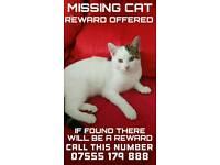 REWARD FOR Missing cat