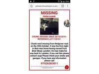 Missing cat black and white male age 16 please help bring my baby home