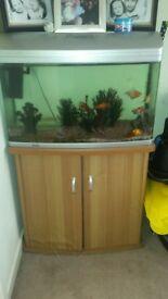 85 lt fish tank including fish