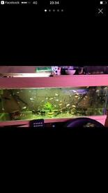 Cheap tropical fish for sale