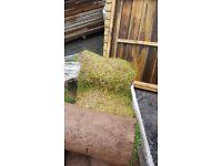 12 rolls of dicoloured turf