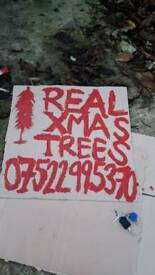 Real Christmas Trees 7ft 8ft Free delivery in Belfast