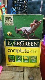 Grass Seed - Evergreen