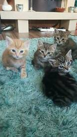 Stunning kittens for sale ready now