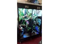 Large black vivarium cabinet.. 2 living areas