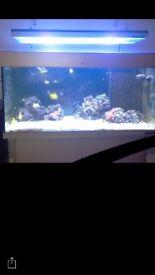 Tropical Marine Fish Tank