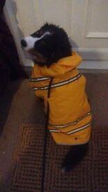 CUTE YELLOW WATERPROOF RAINCOAT WITH HOOD FOR MEDIUM DOG