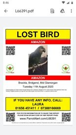 Green Amazon Parrot missing