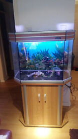 165 LITER AQUA ONE FISH TANK AND STAN FOR SALE,FULL SET UP
