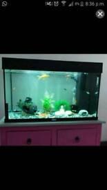 Juwel Rio 120 Aquarium Fish tank