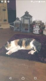 My cat went missing on the 26th January 2018 if you see her please ring 07736930977