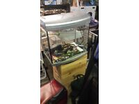 Tropical Fish Tank 24x15x12 inches size with Heater Filter,Backing only needs gravel