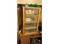 Leopard gecko, Snake, reptile etc: breeding unit / vivarium - heated with thermostat