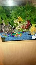 Fish tank with ornaments