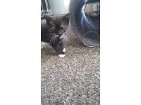 3 kittens. 2 boys 1 girl