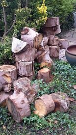 Large tree rings (eucalyptus) for firewood/garden. Can take all or part load.