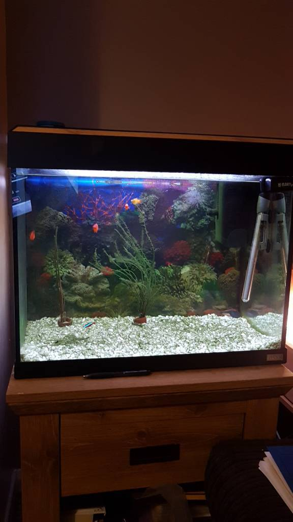 Tropical fish tank with pump and heater