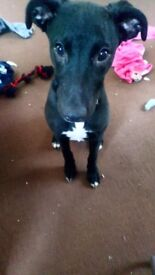 Puppy looking for a forever home x