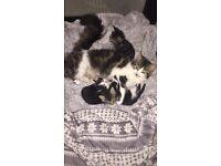 Kittens for sale - 2 boys 1 girl
