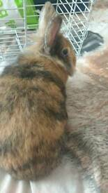Female rabbit & cage plus accessories