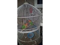 Love Birds for sale £60 for both cage £20