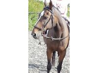 Horse needing sharer great child pony