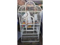 6 ft parrot cage complete with accessories. Only £400 ono