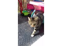 2 loving cats need new home