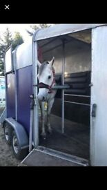 Ifor Williams 505 horse tralier