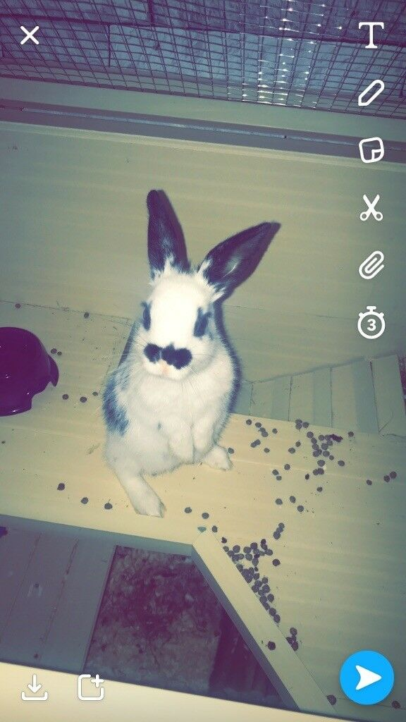 Selling my 4 months old female rabbit, back and white. Comes with indoor home and all accessories .