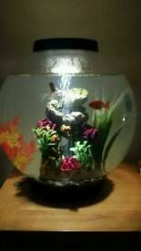 Biorb 30l cold water fish tank