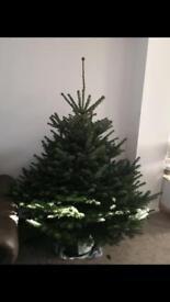 Real 6ft Christmas Tree