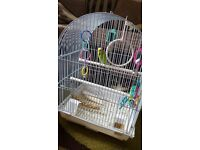 4 months old budgie with cage