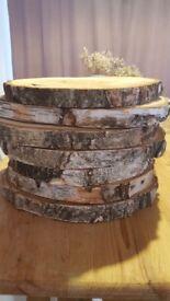 Birch wooden tree slice x6