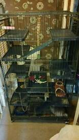 2 chinchillas and cage and accessories