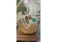 Bird + cage