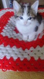 Looking. Good pepl laik very small cat baby 10 week