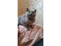 MISSING CAT SANDBACH