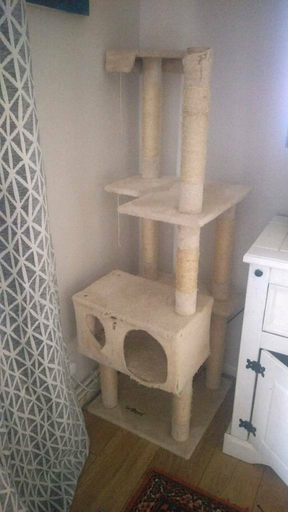 Large cats activity tree