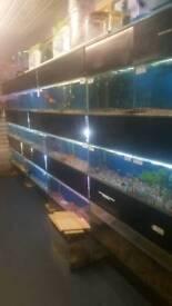 Rack of fish tanks