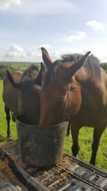 Wanted land with or without static for small facility equestrian