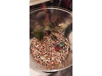 Fish tank Starter with fish school