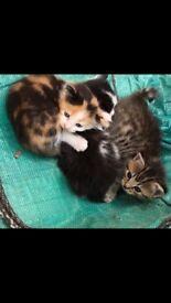Gorgeous kitten for sale *cheap*