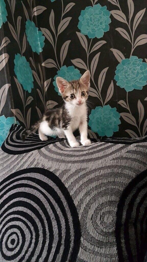Kitten + kittens stuff 100