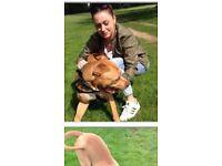 Dog Walker / Puppy Care / Pet Feeding Battersea