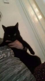 Loving black 1yr old male cat free to good loving home. I am moving house and unable to take him.