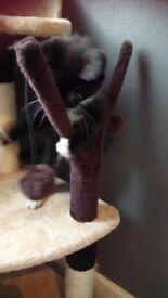 Cat activity scratch post