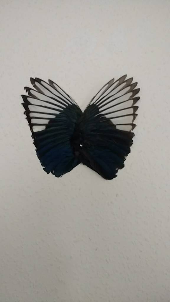 Magpie wings